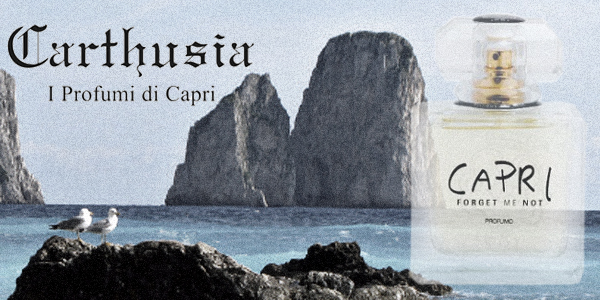 Carthiusa Capri(forget me not)